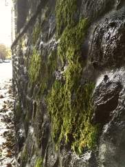 Where there is loads of rain, there is moss! Lots and lots of fuzzy moss!